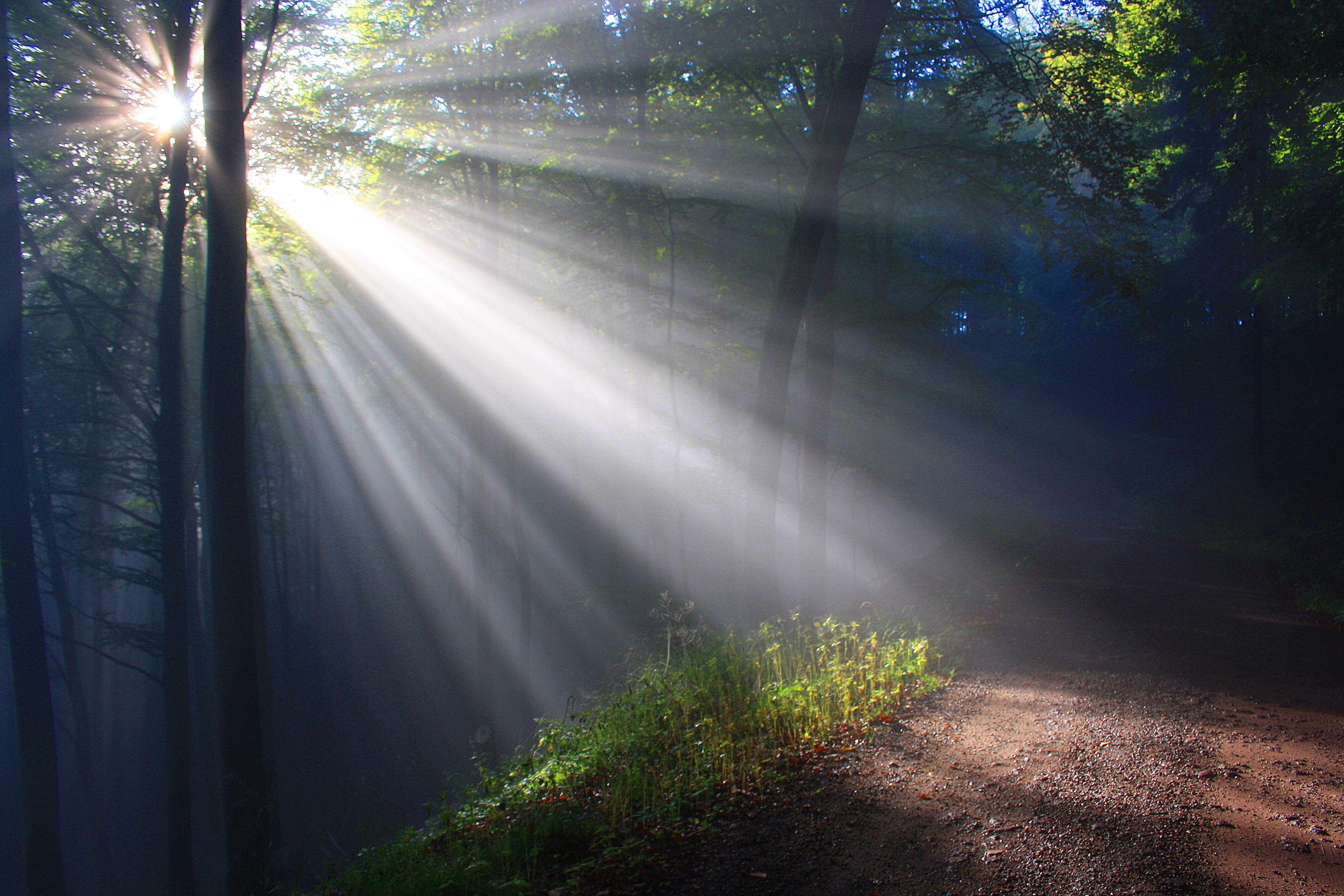 Voyante - Soleil forêt